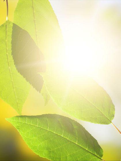 人造光合作用  人造光合作用新进展:阳光转化成零排放燃料