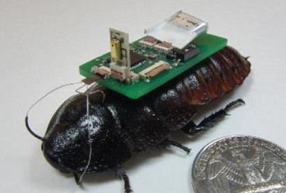 半机器人蟑螂